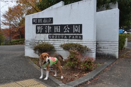 20111128野津田公園01