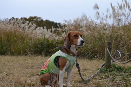20111128野津田公園07