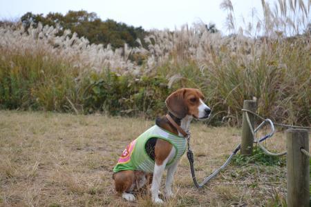 20111128野津田公園06