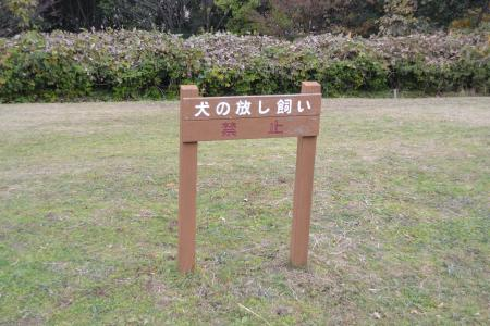 20111128野津田公園13