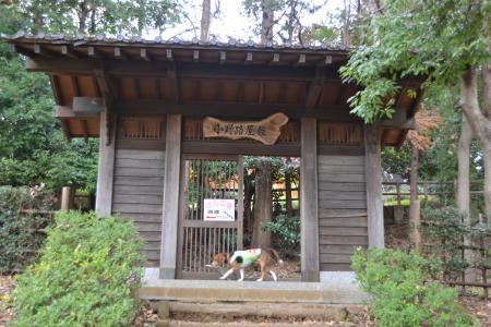 20111128野津田公園12