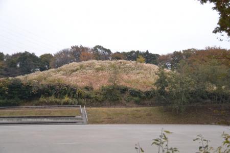 20111128野津田公園11