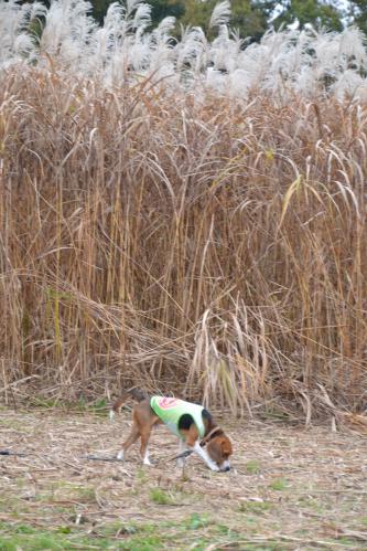 20111128野津田公園16