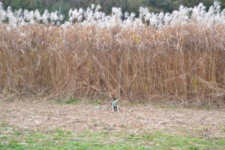 20111128野津田公園15