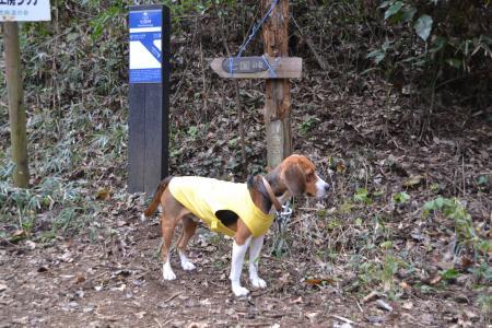 20111129相原中央公園11