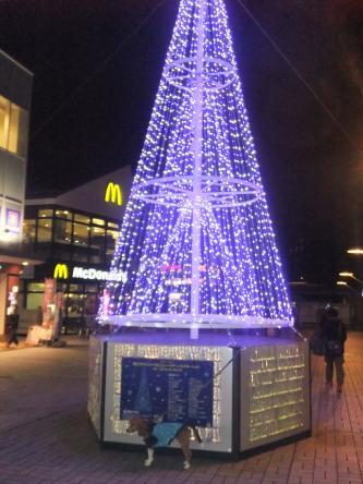 20111201南大沢01
