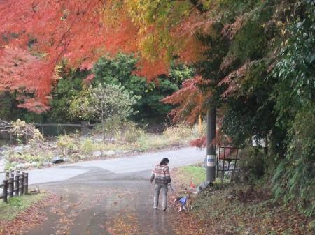 20111203丹沢01