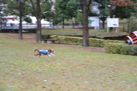 20111203丹沢09
