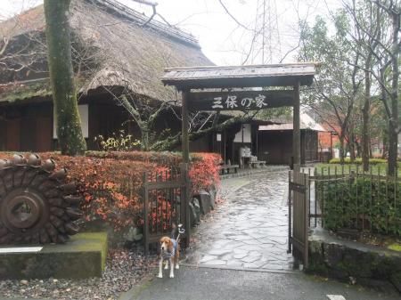 20111203丹沢07