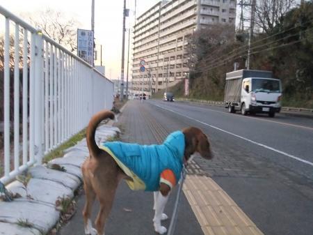 20111219散歩03