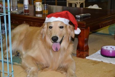 20111224クリスマス25