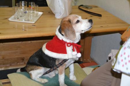 20111224クリスマス24