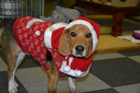 20111224クリスマス23