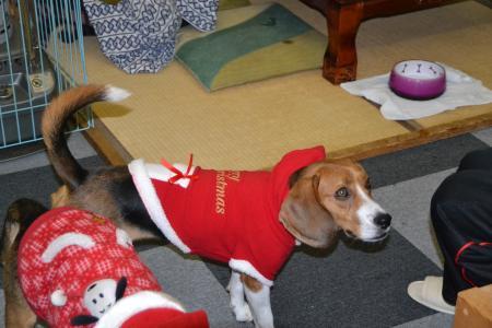 20111224クリスマス22