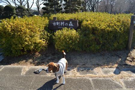 20120113昭和の森公園03