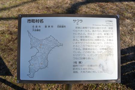 20120113昭和の森公園04