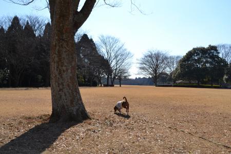 20120113昭和の森公園10