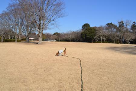 20120113昭和の森公園09