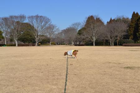 20120113昭和の森公園07