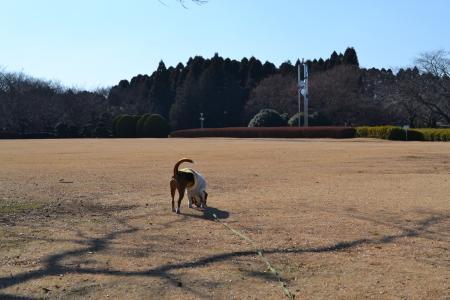 20120113昭和の森公園06