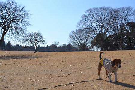 20120113昭和の森公園12