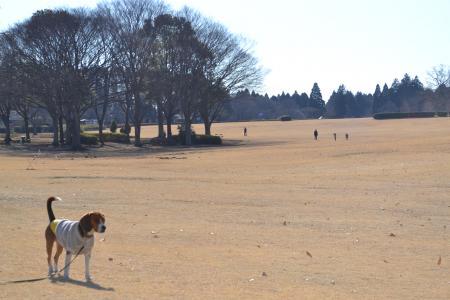 20120113昭和の森公園11