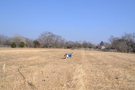 20120201秋元牧場10