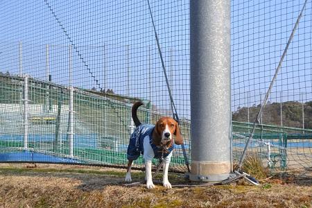 20120201秋元牧場23