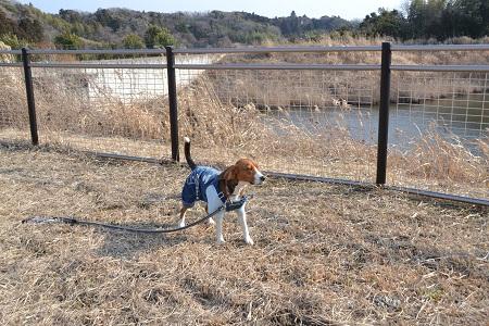 20120201秋元牧場21
