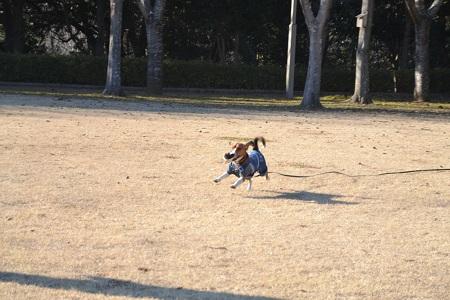 20120203坂田池NIKON 036