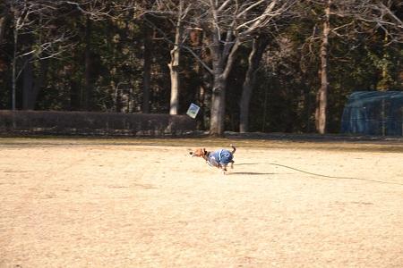 20120203坂田池NIKON 035