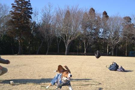 20120203坂田池NIKON 055