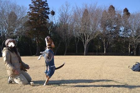 20120203坂田池NIKON 053