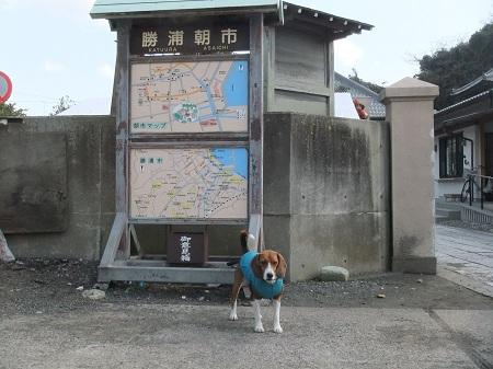 20120210勝浦06