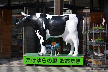 20120210勝浦02