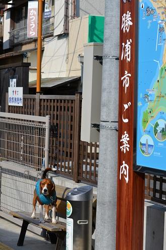20120210勝浦09