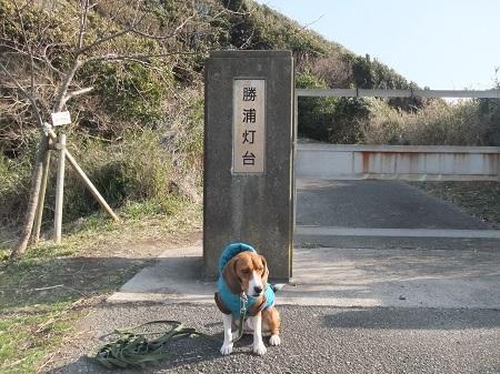 20120210勝浦23
