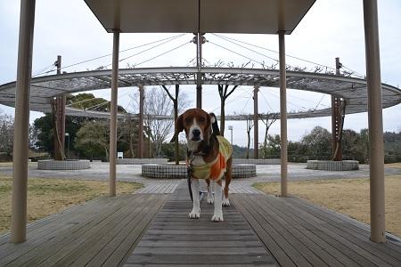20120318木下万葉公園09