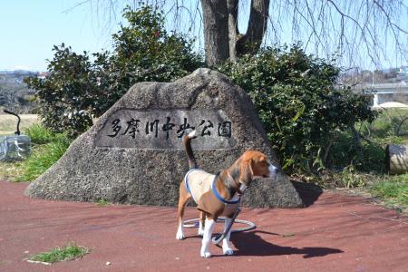 多摩川中央公園01