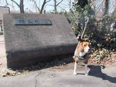福生緑地公園