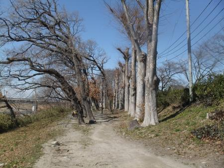 福生緑地公園09