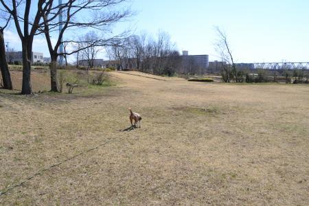 多摩川中央公園09