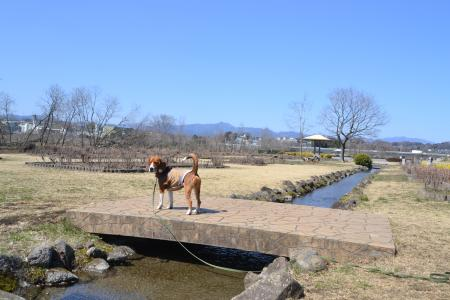 多摩川中央公園13