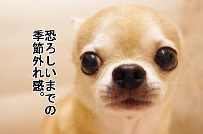 IMGP6697_1.jpg