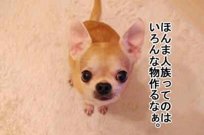 IMGP9408_3.jpg