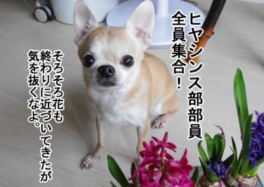 IMGP9749_1.jpg