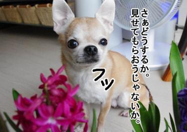 IMGP9755_3.jpg