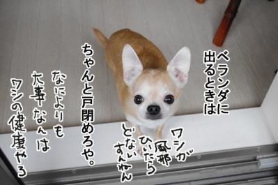 IMGP9835_5.jpg