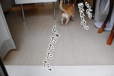 IMGP9846_6.jpg