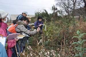 20111222林縁の植生調査風景2